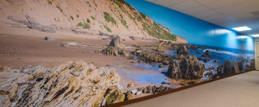 Crystal cove beach wall mural panorama