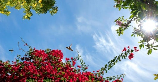 sky ceiling with red flowers and hummingbirds fluorescent light covers