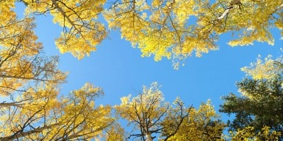 colorado aspen trees sky ceiling fluorescent light covers