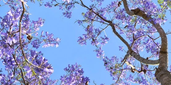 sky ceiling with purple trees fluorescent light covers