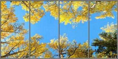 colorado aspen trees sky ceiling fluorescent light covers 4 panel layout